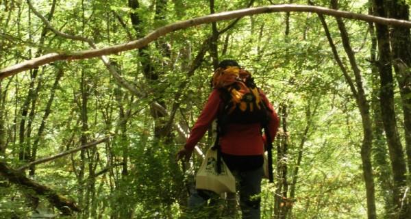 Προκήρυξη  Αγώνων Βουνού Παρθένου Δάσους Παρανεστίου 2012 (Virgin Forest Trail ή VFT)