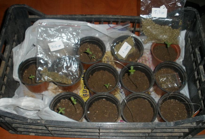 Σύλληψη ημεδαπού για καλλιέργεια φυτών κάνναβης και κατοχή ναρκωτικών