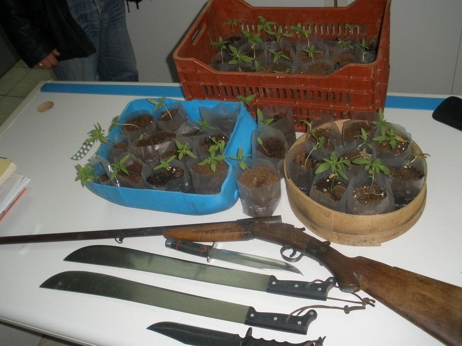 Σύλληψη ημεδαπού για καλλιέργεια φυτών κάνναβης, κατοχή ναρκωτικών και παράνομη οπλοκατοχή
