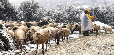 Διαδικασία υποβολής αιτήσεων χωροταξικής ανακατανομής βοσκοτόπων για το 2021, από κτηνοτρόφους της ΠΑΜΘ