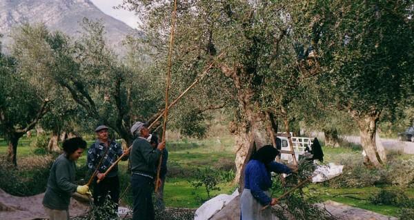 Αγροτικές εργασίες μηνός Νοεμβρίου