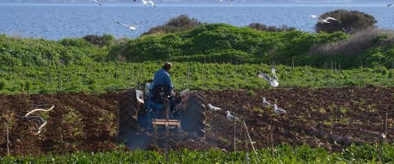 Οι αγροτικές εργασίες για τον Σεπτέμβριο