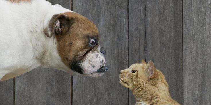 Τελικά οι γάτες ή τα σκυλιά μας αγαπούν περισσότερο;