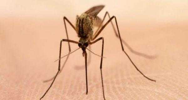 Γιατί τα κουνούπια τσιμπάνε μερικούς ανθρώπους περισσότερο από άλλους; Η απάντηση της επιστήμης μας εκπλήσσει