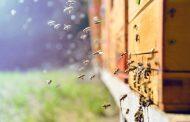 Το ευφάνταστο πείραμα με τις μέλισσες, τα ψάρια και τα ρομπότ
