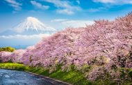 Μαζεύουμε τα ομορφότερα λουλούδια σε επτά ανθισμένα μέρη του κόσμου