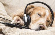 Spotify: Τώρα οι σκύλοι μπορούν να ακούν τη δική τους μουσική